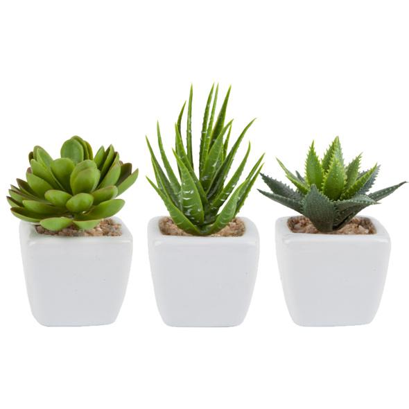 Grünpflanze
